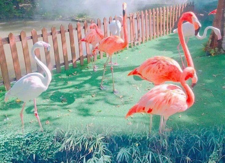 【苏州】飞鸟王国来啦~足不出苏!仅19.9赏世界珍奇百鸟!属于华东人的鸟类主题生态旅游景区,汇集了国内和世界各地的珍奇鸟类150多个品种~