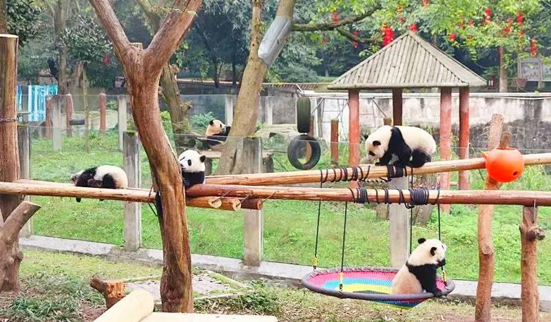 重庆动物园门票成人票(随买随用)
