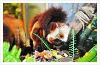 【长隆飞鸟乐园◆活力开园】¥79元=1大1小(1小1.0m以下)身临其境感受湿地物种多样性!玩转动物主题公园!快乐起飞,趣探飞鸟!