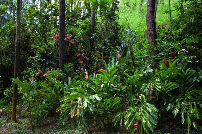 斐济南迪兰花公园