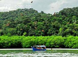 红树林生态之旅:赏老鹰、红树林、海钓