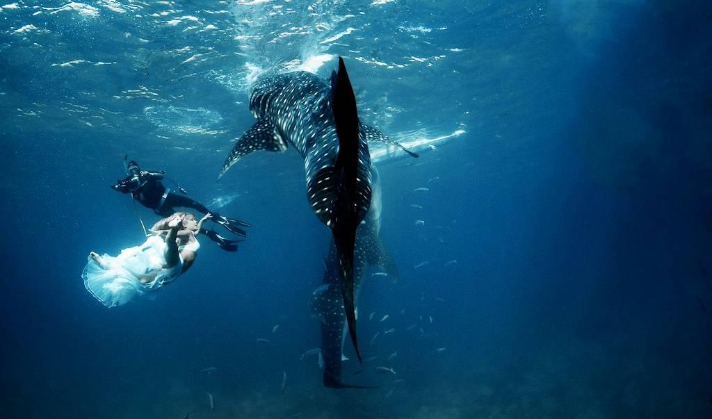 菲律宾杜马盖地与鲸鲨共舞