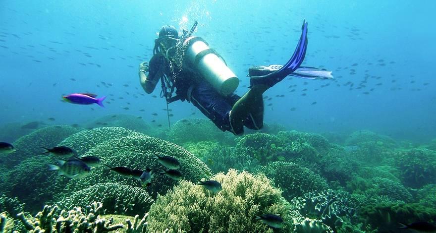 菲律宾杜马盖地APO岛潜水