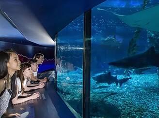 香港海洋公园、迪士尼乐园三日游景点_香港海洋公园