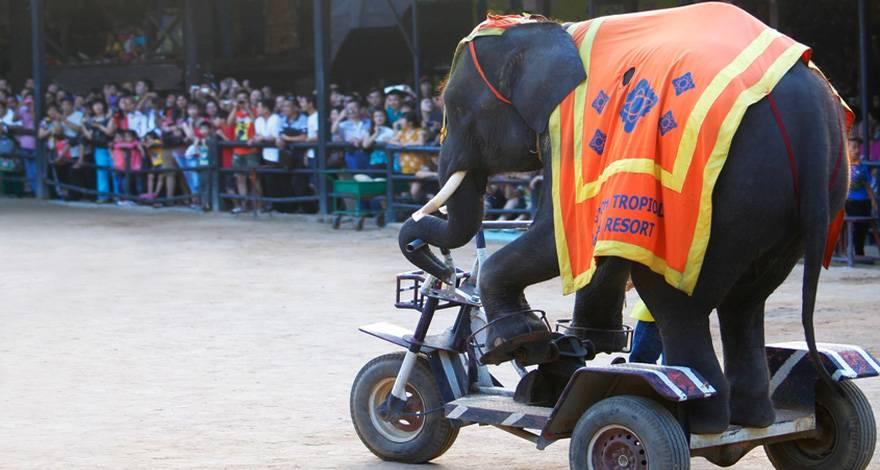 新马泰十日游:泰国东芭民俗文化村-大象表演