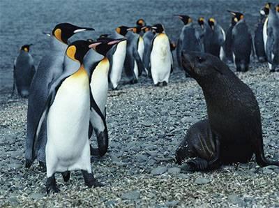 洪堡小企鹅