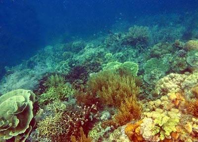 菲律宾巴拉望科隆岛美丽的珊瑚花园