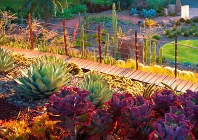 澳大利亚悉尼皇家植物园