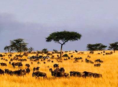 肯尼亚八天游:肯尼亚马赛马拉国家野生动物保护区