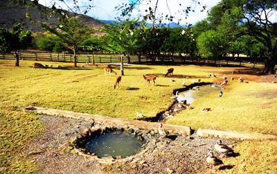 毛里求斯拉古娜酒店8天游_毛里求斯鸟公园