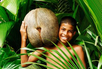 塞舌爾海椰子