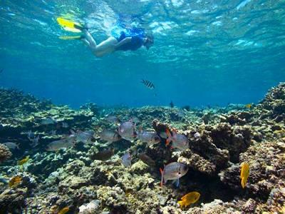 塞舌尔圣安妮国家海洋公园-浮潜