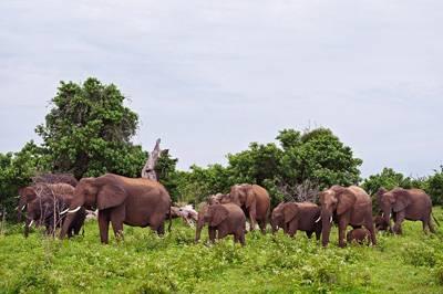 非洲四国14天游_博茨瓦纳-乔贝国家公园