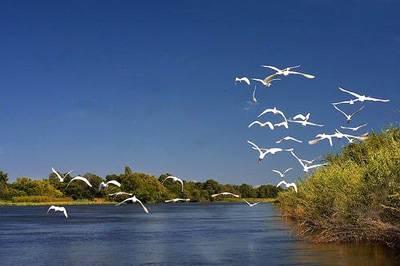 非洲四国14天游_博茨瓦纳-奥卡万戈河