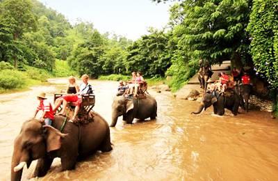 泰国六日游_泰国芭堤雅丛林骑大象