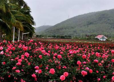 海南4天游景点_海南亚龙湾国际玫瑰谷
