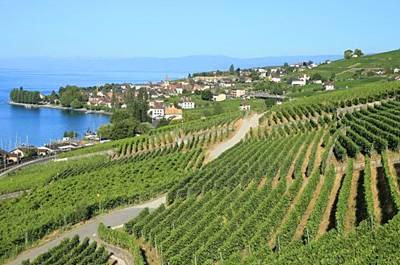瑞士10天游_瑞士拉沃葡萄酒庄