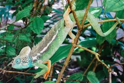 毛里求斯、马达加斯加12天游_马达加斯加-蝴蝶谷-变色龙