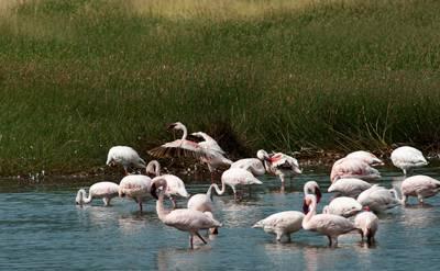 肯尼亚八天游:博戈里亚