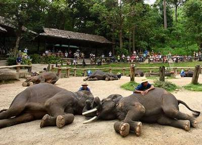泰国清迈、清莱六天游_泰国清迈大象训练营