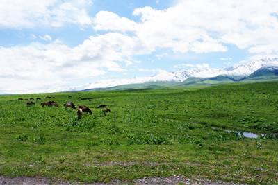 新疆8天游景点_新疆那拉提草原
