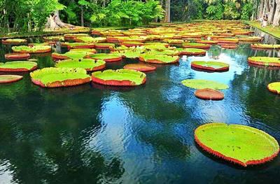 海岛旅游推荐酒店_毛里求斯庞普勒穆斯国家植物园