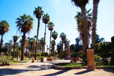 埃及10天游_孟菲斯古城遗址