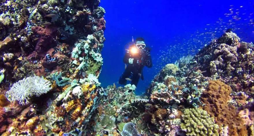 畅游菲律宾海豚湾pg岛潜水体验五天赠送688元珊瑚花园