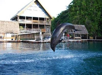 帕劳海豚湾海豚