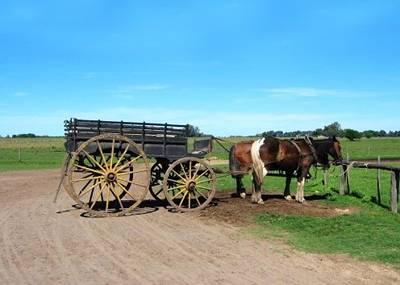 南美3国14天:阿根廷古农庄老式马车