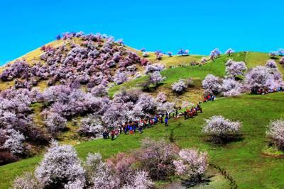 新疆8天游景点_吐尔根杏花沟