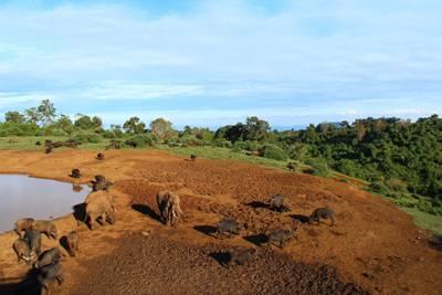 肯尼亚7天游景区_阿布戴尔地区