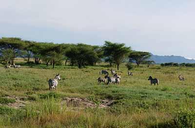 肯尼亚、坦桑尼亚14天游:坦桑尼亚-塞伦盖堤国家公园