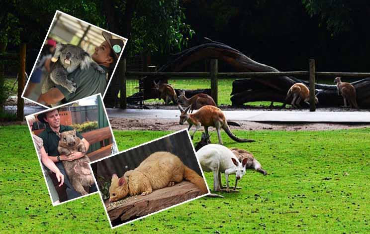 澳洲西澳八天游:澳大利亚-凯维森野生动物园Caversham Wildlife Park