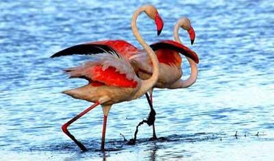 肯尼亚深度狂野8天游:肯尼亚爱尔门太特湖