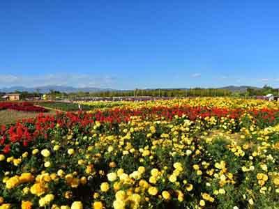云南6天游:花语牧场