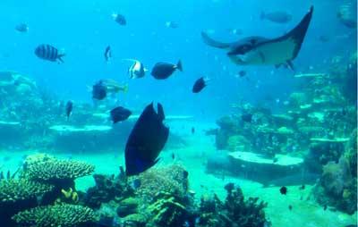 澳洲冬令营14天:黄金海岸海洋世界主题公园