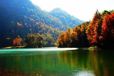 云南,贵州,广西三省联游五天:德保红叶森林公园
