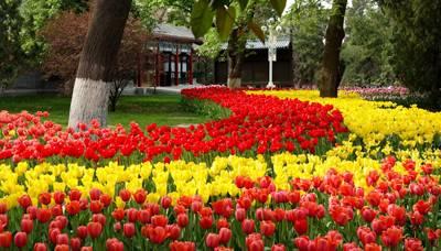 北京5天游景点_北京中山公园郁金香