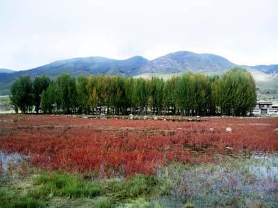 四川6日游:红草地