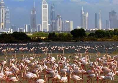 迪拜6天游_火烈鸟湿地公园