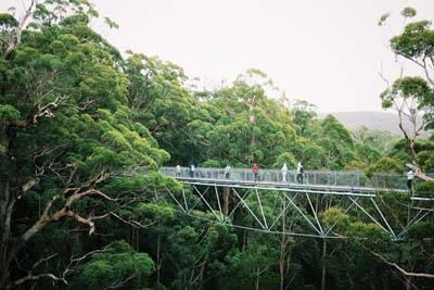 西澳8日游:澳大利亚-沃尔普-树顶漫步