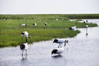 东北7日游:哈尔滨-齐齐哈尔扎龙自然保护区