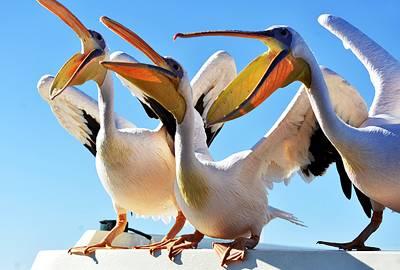 非洲四国14天游景点_纳米比亚鹈鹕岬