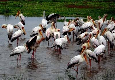非洲四国14天游:马亚拉湖