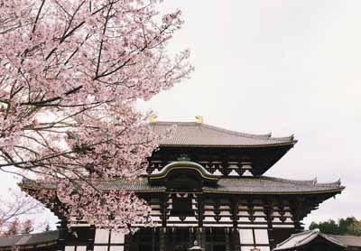 日本6天游:日本奈良东大寺公园