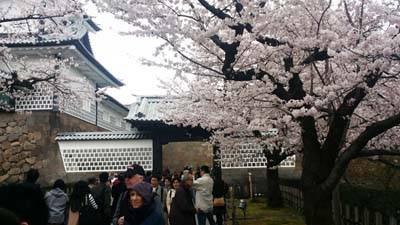 日本6天游:日本兼六园赏樱