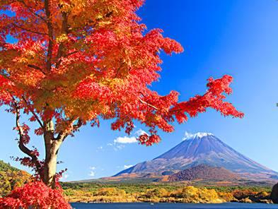 日本7天游:日本富士山雪景