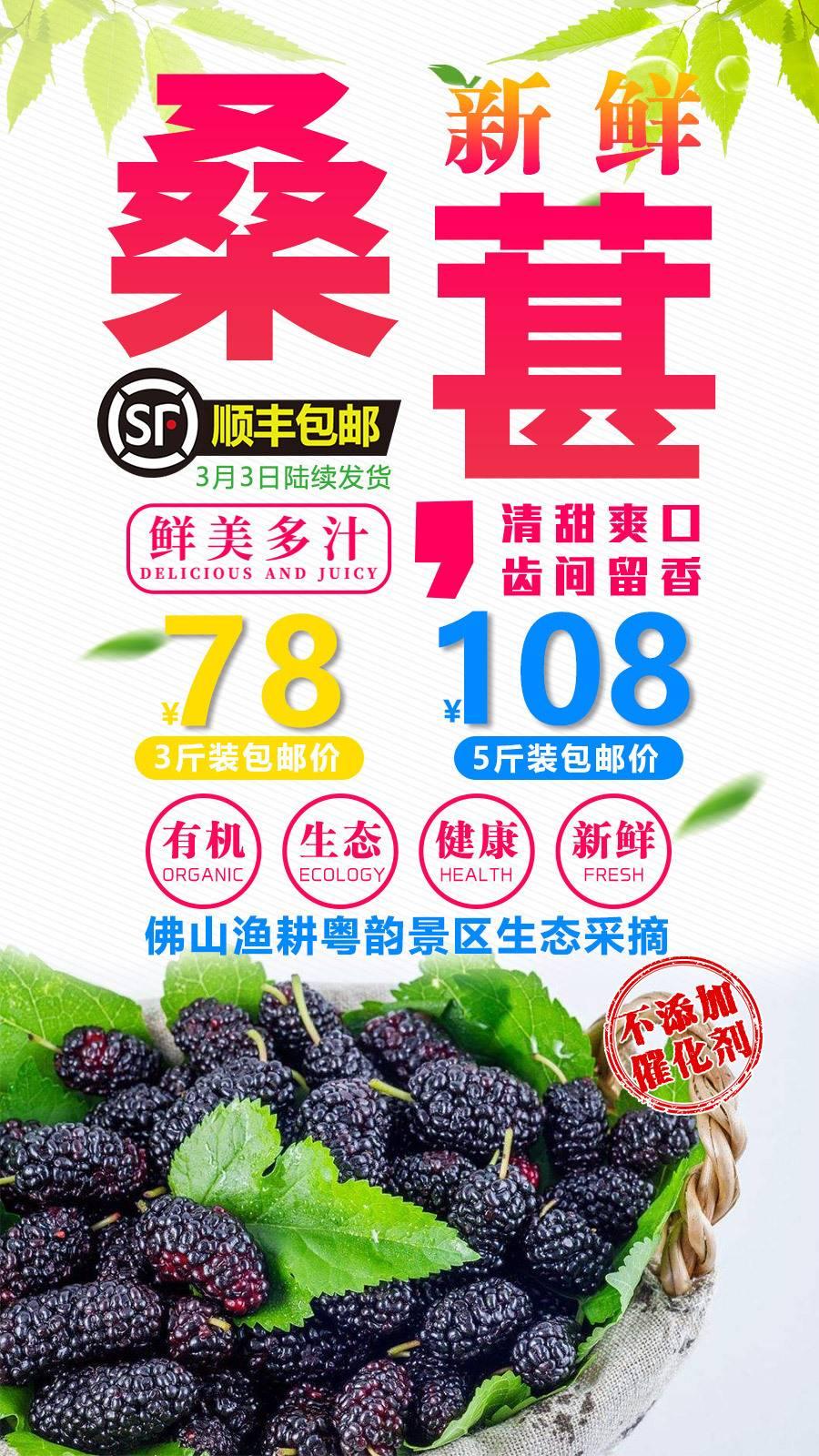 【桑葚上市啦】78元3斤,广东8市顺丰包邮!不打药无催化,现摘当天发货,新鲜桑果到家!