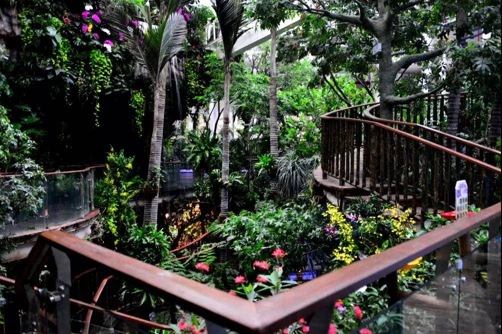 【限时抢购】99元/人打卡国内shou家室内热带雨林馆~8大展区、800+奇妙生物、15000m²游览面积,有效期至6月30日